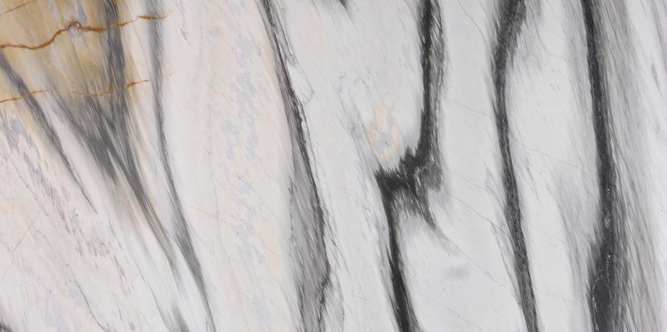 cipollino